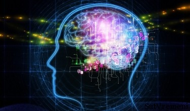 отличие мужского и женского мозга
